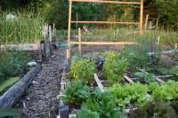 Community Garden in July
